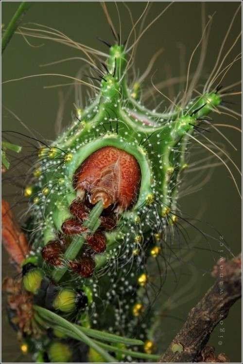 صورحشرات غريبه zoom29.jpg